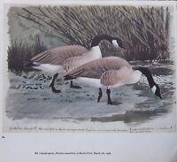 Schöne Vintage Vogel Aufdruck ~ Kanada Geese ~