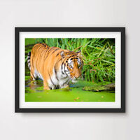 TIGER JUNGLE ANIMAL WILDLIFE PHOTOGRAPHY ART PRINT Poster Wall Picture Green