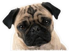 PUG Peeping vinyl sticker 100mm high Cute Peeping Pug Dog