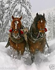 Clydesdale / Horse In Snow 8 x 10 / 8X10 GLOSSY Photo Picture IMAGE #7