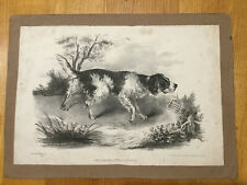 c1840 - Dog  -  Attractive lithograph of a Spaniel