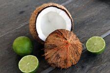 Coconut Lime Verbena Premium Grade Fragrance Oil 2 oz