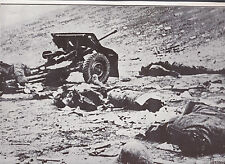 German Gun & Dead Crew from Red Army Shell WWII Dispatch Photo News Service
