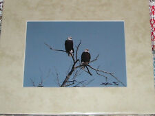 PHOTO ART BALD EAGLES COAL CREEK AURORA CO 5X7 MATTED TO 8X10 SIGNED #'D 40/100