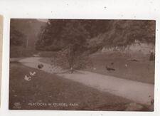 Peacocks In Arundel Park Sussex Schwerdtfeger 01399 Vintage RP Postcard 600b