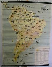 Scheda crocifissi America 103 ANIMALI ANIMALS 6,5mio scheda 87x117cm Mappa Muro Map