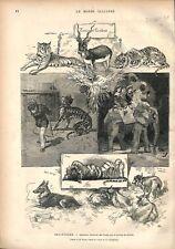 Zoo Tigre Eléphant Loup Chèvre Léopard Angleterre Prince de Galles  GRAVURE 1876