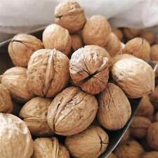 Mountain Walnuts Fresh Harvested  2018
