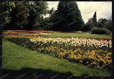 Foto-Stuttgart-Wilhelma-Bad-Cannstatt-Blumen-Botanik-Pflanzen-um-1985-66
