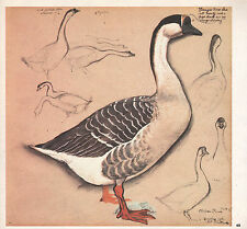 BEAUTIFUL VINTAGE BIRD PRINT ~ DOMESTIC CHINESE GOOSE IN FLIGHT