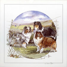 SHETLAND SHEEPDOG SHELTIE COLLIE DOG ART LIMITED EDITION PRINT
