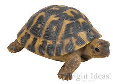 Vivid Arts - REAL LIFE TORTOISE - Large Hermann Tortoise