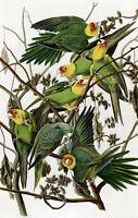 Framed Print - Vintage Asian Style Parakeet Picture (Animal Bird Art Poster)