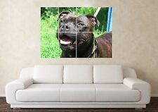 Large Staffordshire Bull Terrier Staffy Dog Crufts Pedigree Wall Poster Art Pict