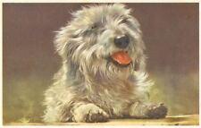 Old Unusual Polish Lowland Sheepdog Postcard Pc from Belgium 1956