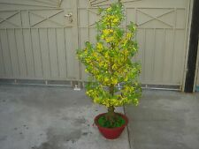 """plastic artificial yellow apricot flower tree with pot 57"""" tall (hoa mai)"""