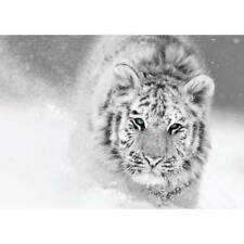 White Tiger Glass Wall Picture. Decorative Glass Print Wall Art. 70x50cm