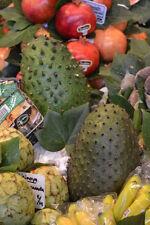 5 Semillas de Graviola, Guanábana, Guyabano (Annona muricata) seeds