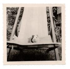 PHOTO ANCIENNE Animal Cochon d'inde Chaise longue Drôle Années 1960 Blanc Noir
