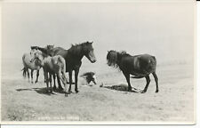 PC34915 Welsh Ponies. Judges Ltd. No 29545. RP