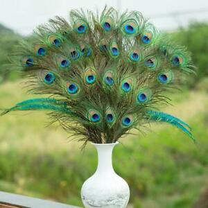 Peacock Tail Feathers Natural 25-30cm Wedding Party Craft Art DIY Home Decor NEW