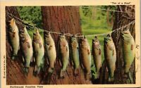 "Northwoods Vacation ""Ten of a Kind"" Fish on a line 1951 Vintage Postcard AA-002"