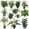Leaf M / Grand Artificiel Fougère Plantes,Très Grandes,Bambou,Lis 60-70cm Haut