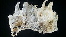 Genuine FL Alligator Skin natural color REAL gator hide alligator hide skin L52