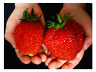 500 PCS Seeds Giant Strawberry Organic Fruit Plants Bonsai Home Garden 2019 New