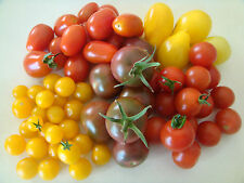 Mixed Mini Tomato 30 Seeds Grape Cherry Currant Pear Black Russian Rare Mix Seed