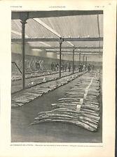 """Commerce vente de """"bois d'ébène"""" d'éléphants Anvers Belgique Belgie GRAVURE 1896"""