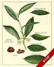 TEA LEAVES TYPES KITCHEN SPICES DRAWING PAINTING ART POSTER PRINT REAL CANVAS