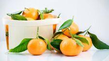 Clementine di Corigliano Calabro - DOLCI e SENZA SEMI - Calabria