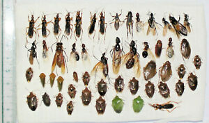 Insect mix,  West Kalimantan. (8)
