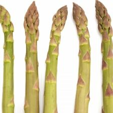 Jersey Supreme Asparagus 2 Year Old Plants Bare Root Crowns All Male 25 Count