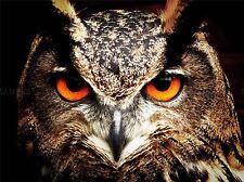 Natura Uccello Gufo chiudere occhi BECCO Preda Aquila Poster Art Print Picture bb1309a