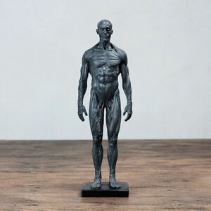 Human Body Muscle Skeleton Statue Sculpture Figurine Tabletop Home Office Decor