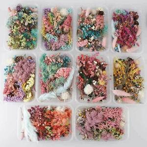 Gepresste getrocknete Blumen für Kunsthandwerk Harz Anhänger Schmuckherstellung