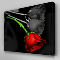 C126 Single Red Rose Black Canvas Wall Art Ready to Hang Picture Print