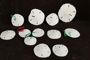 "12 Vintage Sand Dollars For Crafts or Sea Shell Ornaments 4 1/4"" -2 1/4"" D"