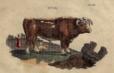 "Brightly's World View - ""BULL"" -1807- Antique Copper Engraving"