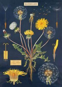 Dandelion Plant & Flower Poster Wrap 50 x 70cm - Cavallini & Co - 22 Designs!