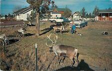 Redmond Oregon~Operation Santa Clause~Grazing Reindeer~1950s Car & Pickup Truck