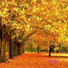 10X10FT pictorial Vinyl fall theme forest background Prop Photo Studio M-151