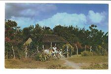Vintage Postcard Panama Quaint Homes of the Interior Bouganvillea Croton Hedges