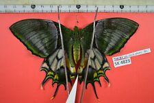 SK 4823 # butterfly Sphingidae Saturniidae Noctuidae Arctiidae Vietnam