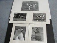 Set Of (5) Original  Photograph's of Animals by Bud Turner, PA.1970's-1980's!!