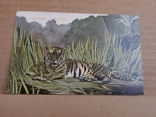 Postcard  Tiger In Long Grass  posted 1906