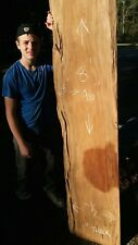 Authentic Old Growth Ancient Burl Sinker Cypress Wood Live Edge Bar Top Slab