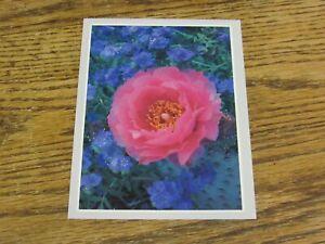 Beavertail Cactus, Anza-Borrego Desert State Park California Postcard (HWBS3)-3